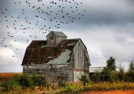 Landwirtschaft & Ackerbau - Die Top 10 US-Magazine auf Twitter
