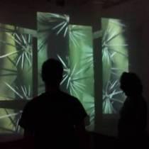 Sneak peek: Nymphaea exhibit opens 28 Jan in the CAF building.