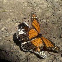 Mobile Post: Coronado butterfly preserve