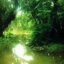 Mobile Post: Ellwood Swamp