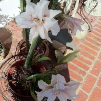 Springtime in Santa Barbara
