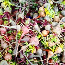 Mobile Post: The beets go on at the Saturday farmers market