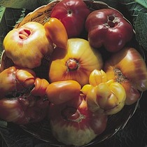 Preserving the Harvest #3: Tomatoes All Year Long!  Instructor: Cindy Shipp