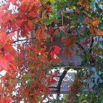 Mobile Post: Autumn in Santa Barbara!