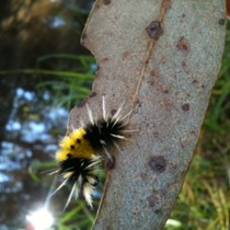 Mobile Post: Spiky Caterpillar