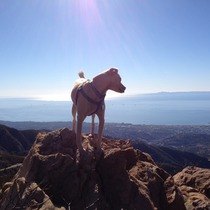 Barry the California Hiking Dog