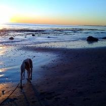 Mobile Post: Henry's beach sunset walk