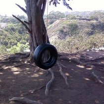 Mobile Post: Cool tire swimg @ wilcox- thanku!