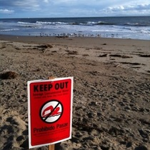 A Two Frame Animated gif of Hendry's Beach Pollution
