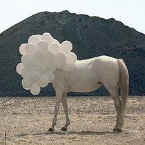 Feeling Horse