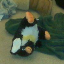 Penguin does a flip!