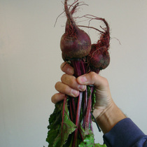 In Season and at the market: Beets