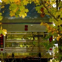 Citizen Posting: Fall Color - Custom Tour Coach