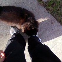 Mobile Post: Friendly cat on my run, random cuteness.