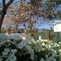 Mobile Post: In-N-Out in Full Bloom
