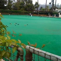 Mobile Post: The Lawn Bowling Club is actually being used