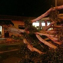 60-80mph Gusts Down Tree Across Upper State Street