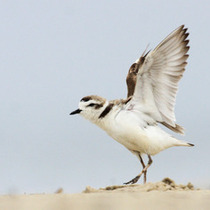 Snowy Plover Docent and Intern Program Training Session