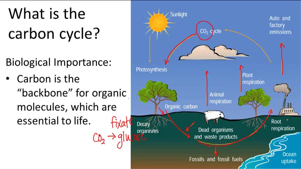 Phosphorus cycle  Simple English Wikipedia the free