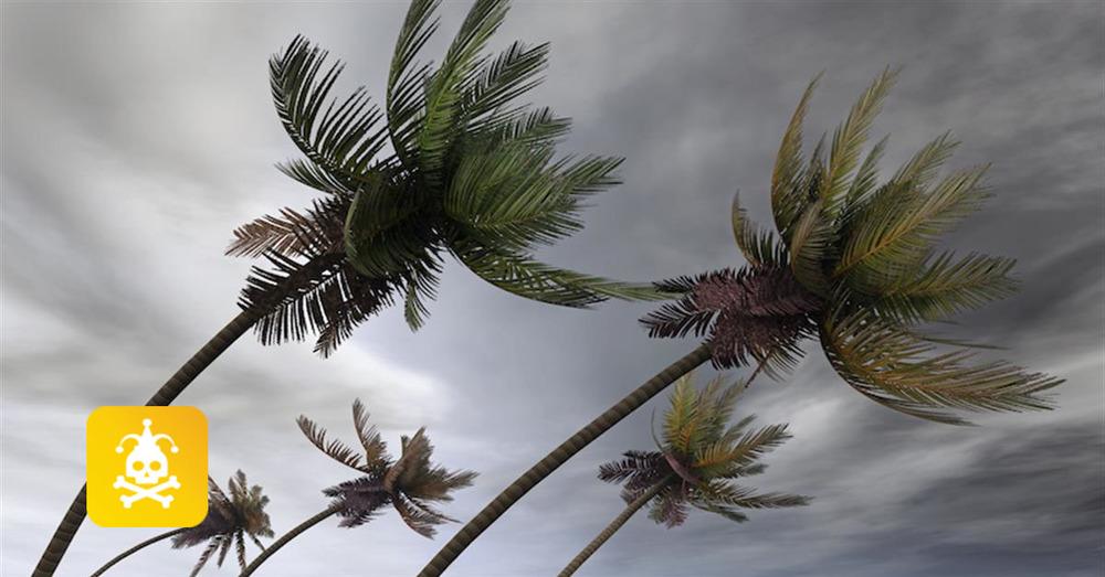 Palm trees jester