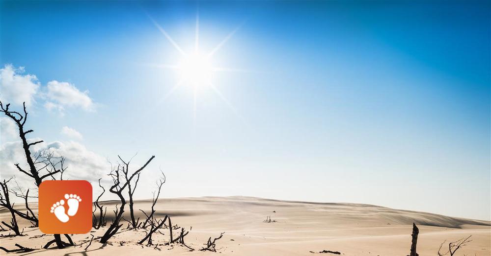 Desert baby steps