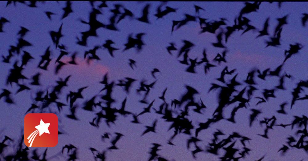 Bats red star halloween