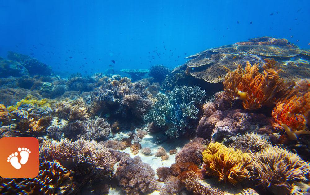 Coral reef baby steps