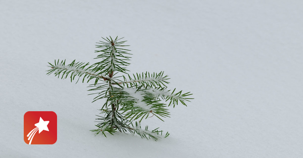 Pine tree red star