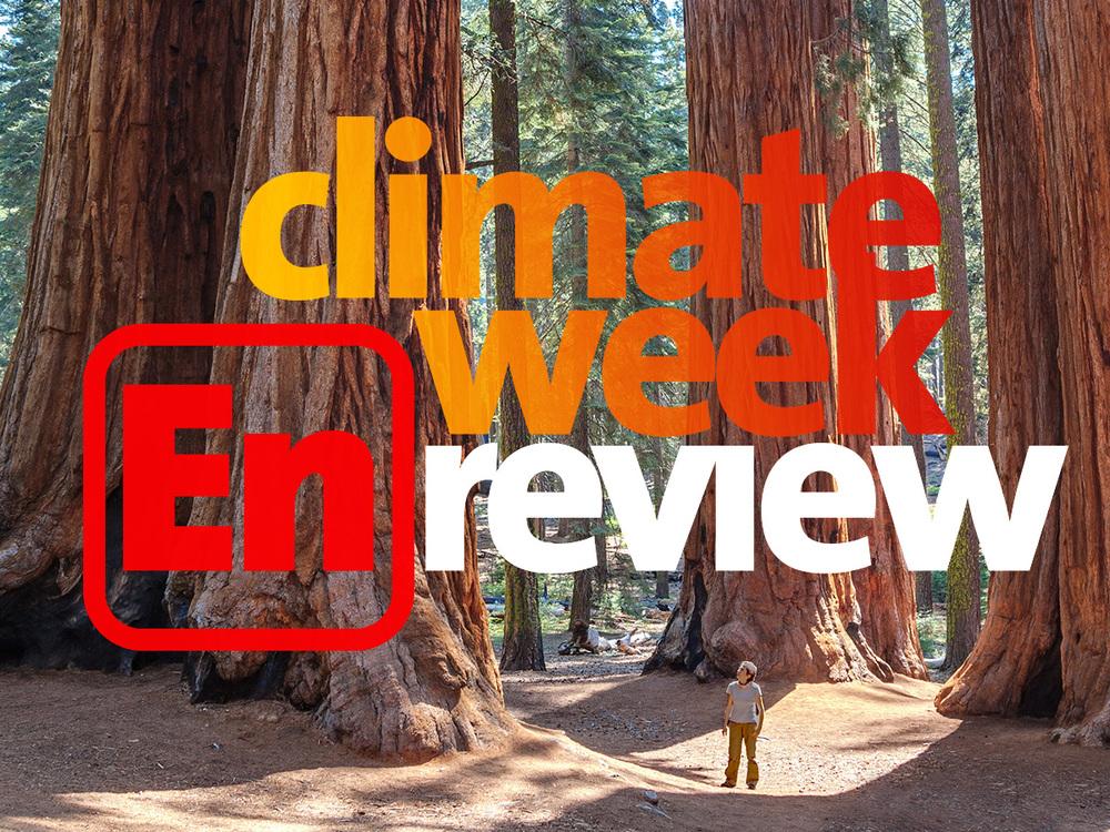 Cwer redwoods