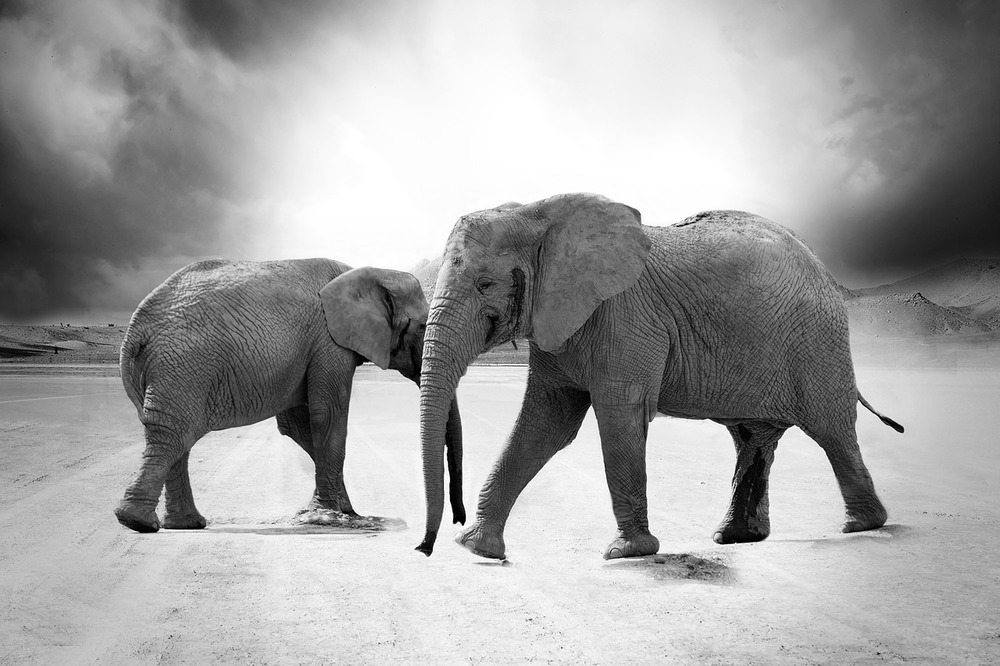 Elephant 970456 1280