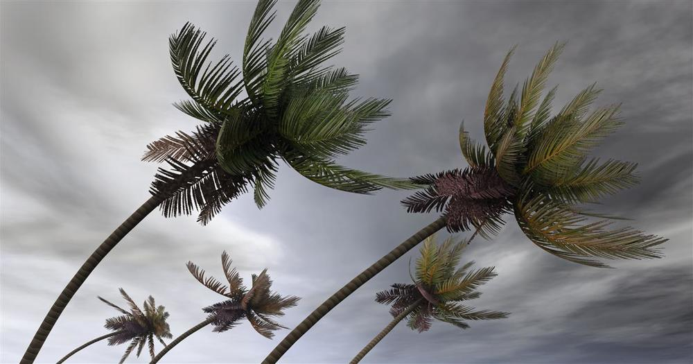 Palm trees in storm