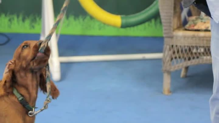 Video How To Prevent A Puppy From Chewing On The Leash Ehow