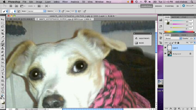 Pictures Of Dogs Removing Red Eye Photoshop