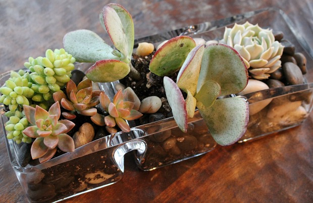 How to create a table top succulent garden ehow home ehow for How to make an indoor succulent garden