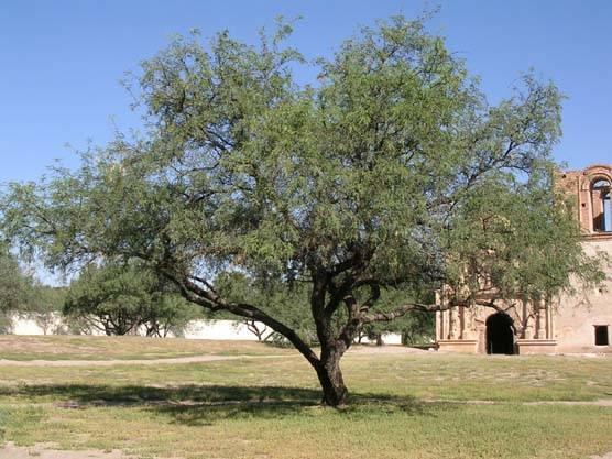 Nature S Honey Tree