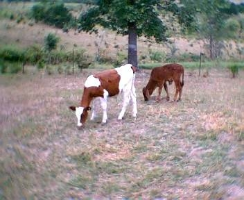 What causes seizures in calves animals for Can fish have seizures