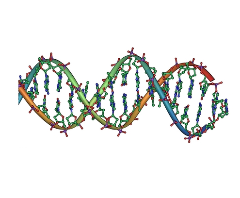 Nucleic Acid Facts | Sciencing