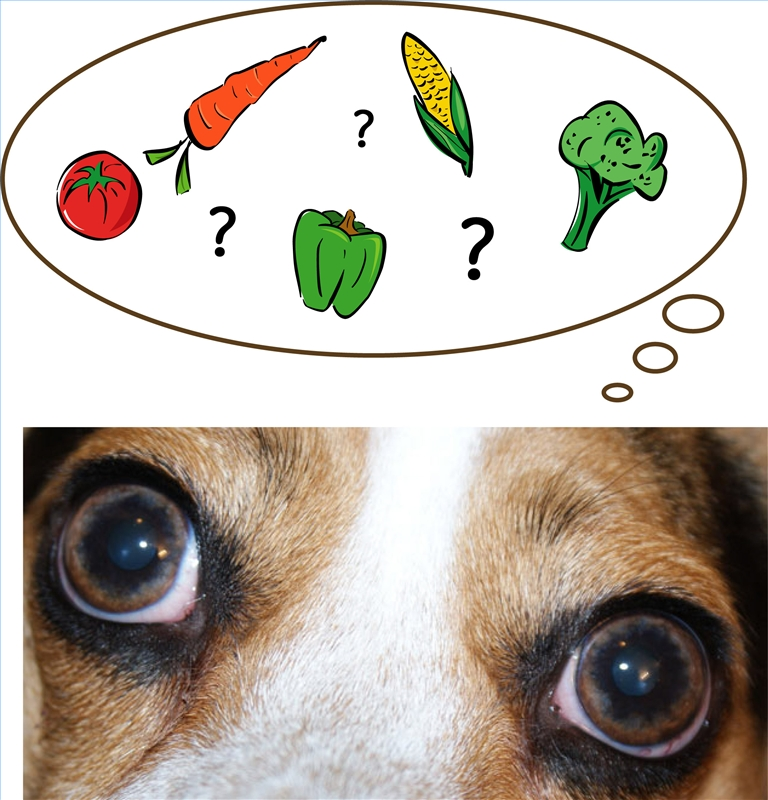 healthy fruits for dogs fruits dogs can eat