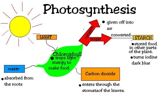 Two Stages Of Photosynthesis Sciencing