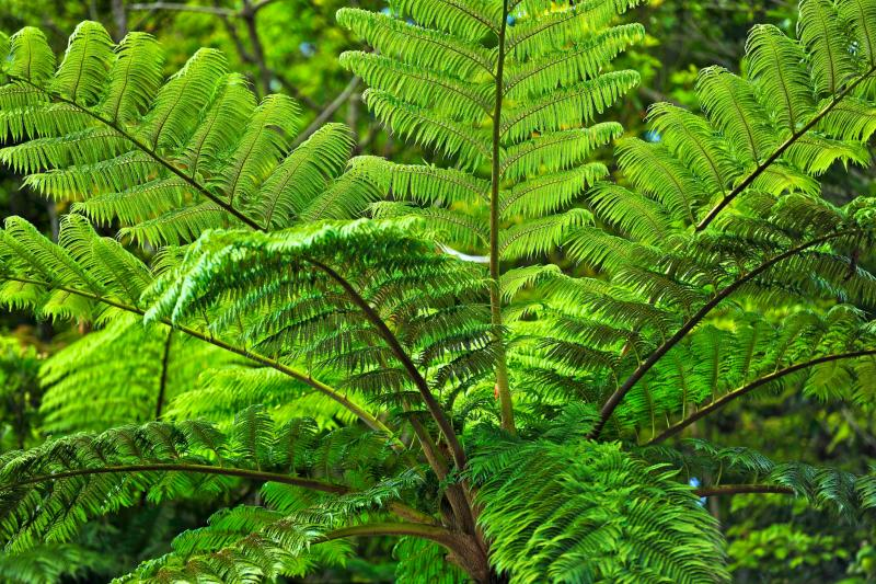 Endangered Plants of the Philippines | Sciencing
