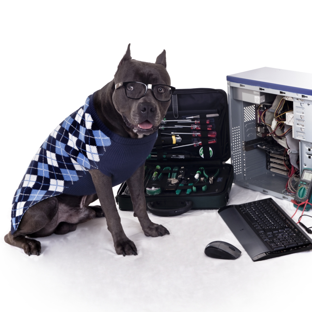 Pitbull dressed as a computer geek