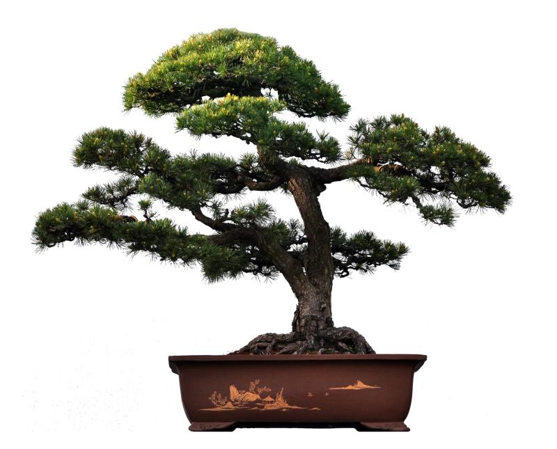 What is the meaning of a bonsai tree our everyday life What is the meaning of tree