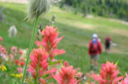 Lodge To Lodge trips with CMH Heli-Hiking
