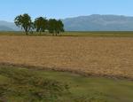 Ed_kinney_hi_res_fall_wheat_cmak_cmmos4