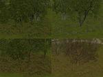 Juju_treebases_summer_cmak_cmmos4