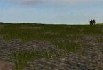 Doodads_grain_green_spring_wheat-ls