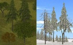 Eds_trees