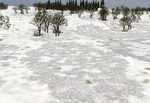 Soft_ground_winter_snow-ls