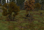 Tree-bases_scattered_autumn-ls