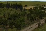 Tree-bases_woods_summer-ls